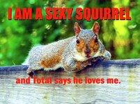 sexy-squirrel.jpg