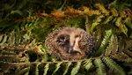 BabyHedgehog_EN-GB1053695179_1920x1080.jpg