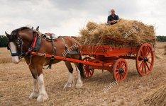 cart and horse.jpg