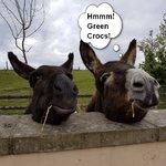 donkey photo2.jpg