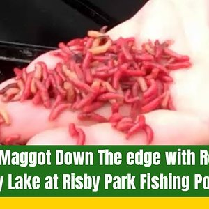 Fishing maggot down the edge with Robbo on Folly Lake at Risby Park Fishing Ponds